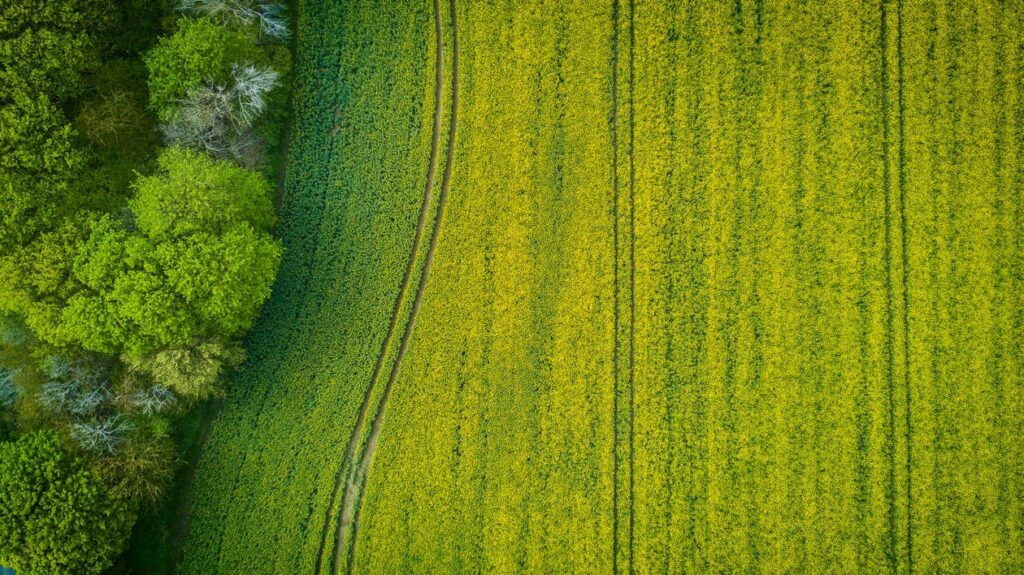 Bioenergy, agriculture and forest groups call for EU policy consistency on sustainable finance